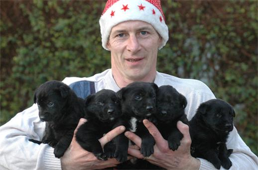 Dessie Harnan of Sligo Animal Rescue with the five rescued pups