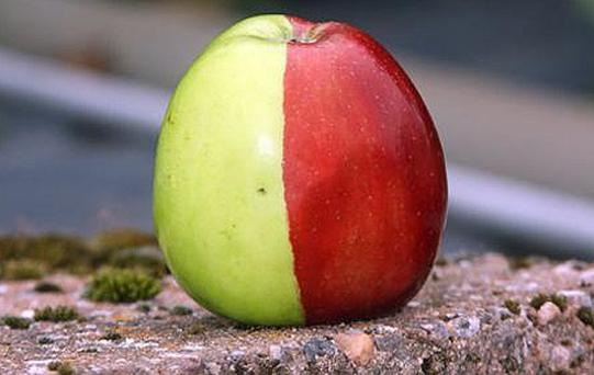Ken Morrish, 72, of Devon, did a double take when he grew a Golden Delicious apple split down the middle - one half was green and the other red