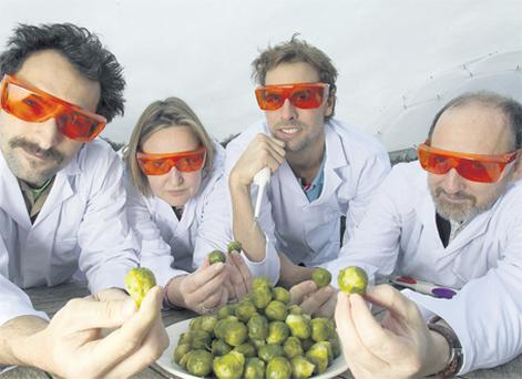 Eden Project scientists in the UK at work on their investigation into the science behind the Brussels sprout. The project involves students testing their DNA for the gene that is believed to determine whether a person likes their sprouts or not, an age-old Christmas conundrum