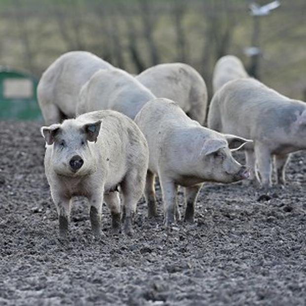 Middlesbrough residents said they would rather smell pig dung, than drugs being smoked