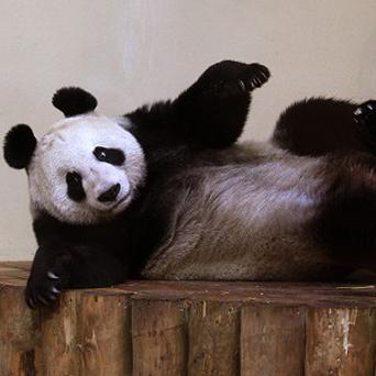 Panda Tian Tian has been named among 12 women in the BBC's Faces of 2011