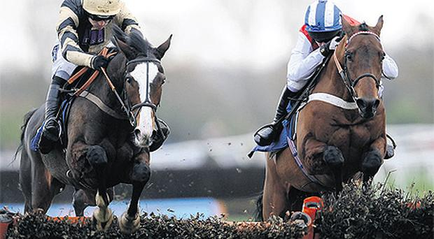 All The Aces (right) finishing second to Paul Nicholls' useful novice hurdler Prospect Wells at Newbury last month - Nicky Henderson's six-year-old can go one better today on his return to the track for the Introductory Hurdle