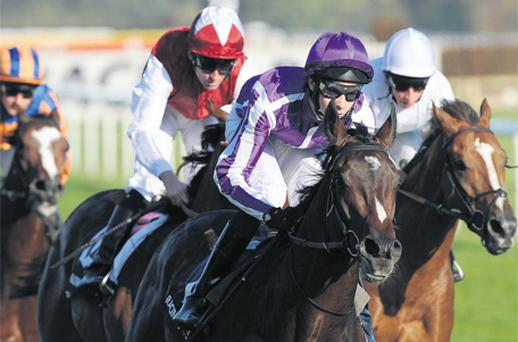 Camelot's sparkling win in the Racing Post Trophy under Joseph O'Brien have made him a deserving Epsom Derby favourite