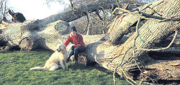 Roisin Lyons by the felled tree yesterday