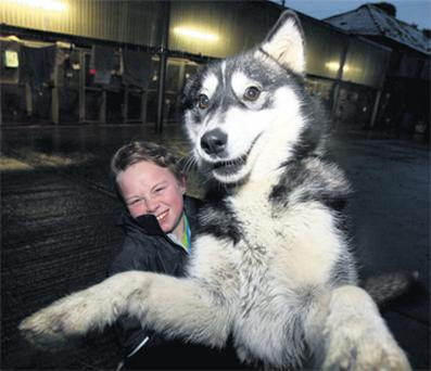 Kevin Roche (10) with Roxy, the newly adopted husky, from Killimor Animal Sanctuary, Co Galway