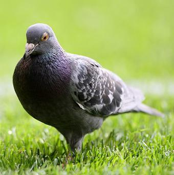 North Wiltshire Magistrates' Court has given two women an ASBO for attracting hundreds of pigeons by feeding them every day