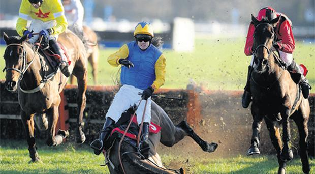Sam Thomas parts company with Captain Sunshine at the last flight in the novice hurdle at Kempton on Saturday