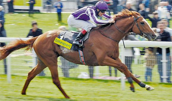 Cape Blanco, here winning the 2010 Dante Stakes at York, has been named America's champion turf horse for 2011
