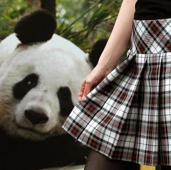 The arrival of two pandas at Edinburgh Zoo has been marked by the creation of a new tartan in their honour