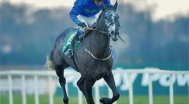 Quel Esprit winning his bumper at Leopardstown under Patrick Mullins in 2008 - the grey is back at the track this Sunday bidding for glory in the Hennessy Gold Cup