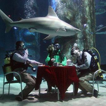 Divers hold a tea party in a shark tank at the London Aquarium