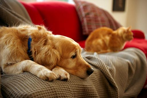 Dogs are largely uninterested in television screens. Photo: Thinkstock