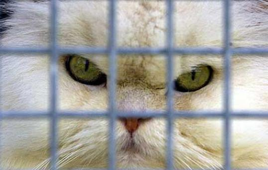 A California man has been jailed for allegedly killing, cooking and then eating pet cats. Photo: AP