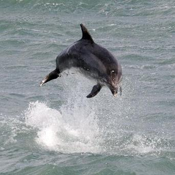 Dolphins are 'people' in a philosophical sense, according to experts