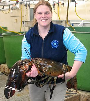 Maine State Aquarium Manager Aimee Hayden-Roderiques is pictured holding 'Rocky', the 27-lb lobster