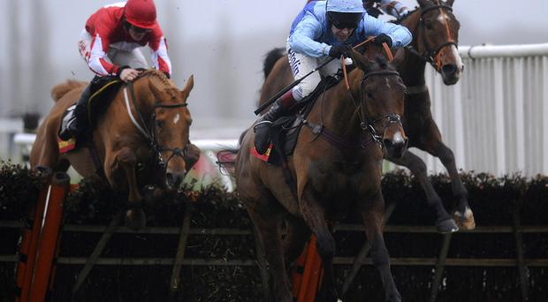 Fingal Bay: Will miss Cheltenham
