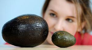 Avocado oil may protect against free radicals which cause disease and ageing. Photo: PA