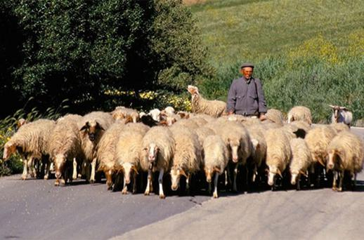 Traditionally the preserve of older men, shepherding has recently attracted 3,000 young Italians, according to agricultural body Coldiretti