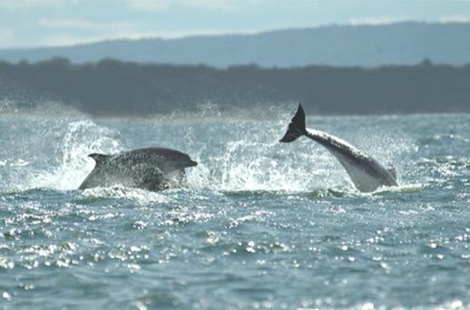 A spokesman for Cornwall Wildlife Trust added: ''Cornwall Wildlife Trust is encouraged that some inshore fishermen are showing an interest in using the acoustic pingers that are known to greatly reduce the accidental capture of these animals''