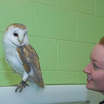 Wildlife assistant Alex Morris with the rescued barn owl at the Scottish SPCA's National Wildlife Rescue Centre (Scottish SPCA/PA)
