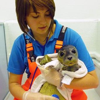 Rescued seal Jessi-Jane with a rescuer from the Hunstanton Sea Life Sanctuary in Norfolk (Hunstanton Sea Life Sanctuary/PA)