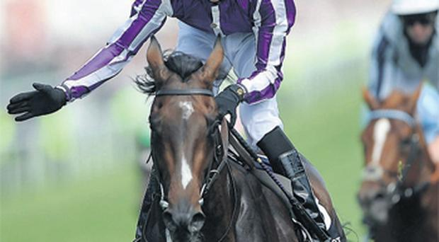 Camelot is sure to start odds-on favourite if he lines up in Saturday's Irish Derby
