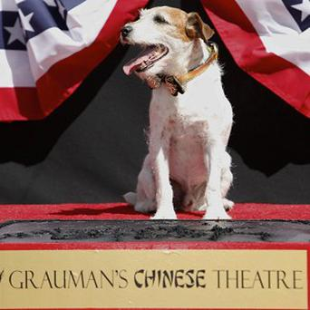 Uggie, canine star of The Artist, has been honoured by becoming the first dog to put its paw prints in cement outside Grauman's Chinese Theatre