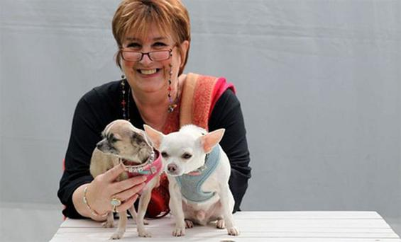 BBC Woman's Hour radio presenter Jenni Murray, photographed backstage on day six at The Telegraph Hay Festival, with her chihuahua Butch