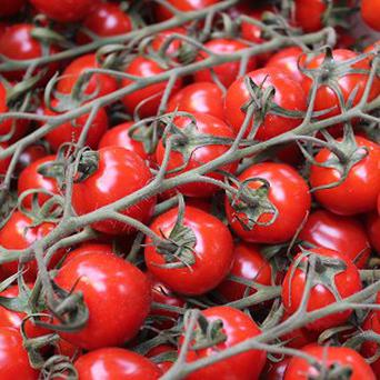 Scientists have identified a gene which they say could be key to bringing back superior tasting tomatoes