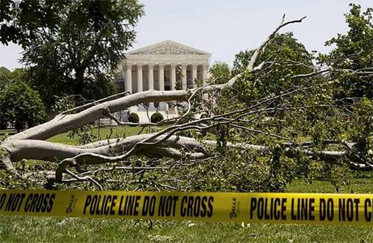 An American beech tree lies on Capitol Hill grounds in Washington. Photo: AP