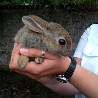 A car had to be taken apart after a rabbit was found trapped inside it