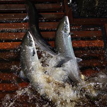 Trout, sticklebacks and roach are among the dead species discovered in a stretch of the Oona River near Dungannon in Co Tyrone.