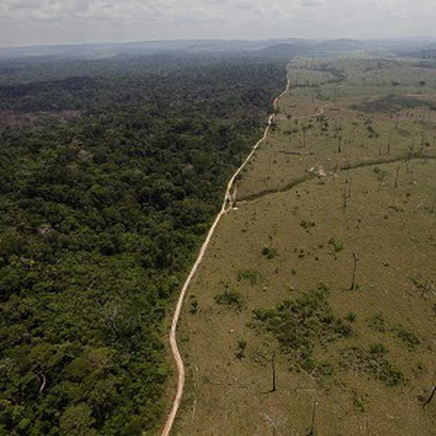 Deforestation has led to the loss of species in the Brazilian Amazon (AP)
