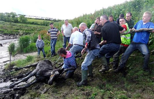 Members of Donegal Pet Rescue and volunteers rescue the horse from the river Swilly near Letterkenny, Co. Donegal.