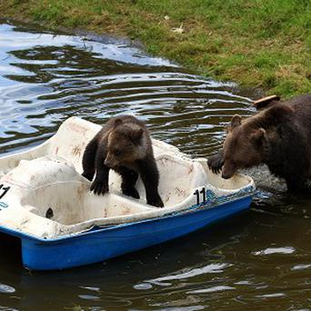Nellie with cub Loki on a pedalo covered in their favourite treats including strawberry jam and grapes