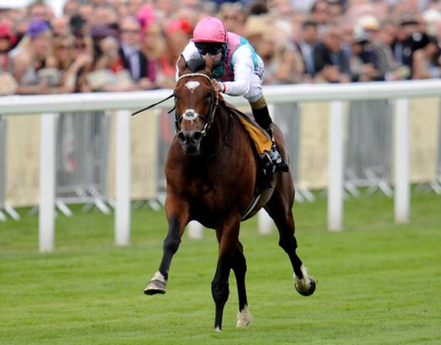 ASCOT, ENGLAND - JUNE 19: Tom Queally, riding Frankel, win The Queen Anne Stakes during Royal Ascot at Ascot racecourse on June 19, 2012 in Ascot, England. (Photo by Alan Crowhurst/Getty Images)