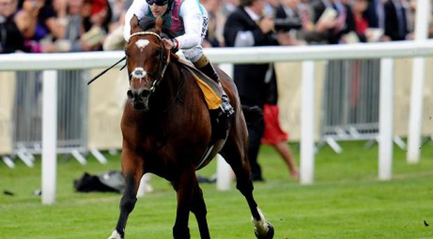 Royal Ascot - Day 1...ASCOT, ENGLAND - JUNE 19: Tom Queally riding Frankel win The Queen Anne Stakes during Royal Ascot at Ascot racecourse on June 19, 2012 in Ascot, England. (Photo by Alan Crowhurst/Getty Images)...S