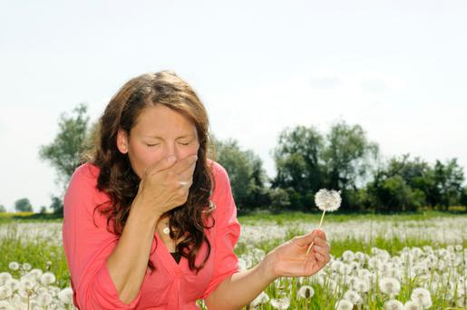 Hay fever sufferers could be set to double by 2040