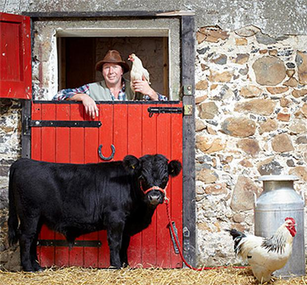 The world's smallest bull, Archie, a 29-month-old Dexter breed owned by a County Armagh-based farm, which measures just 76.2 cm (30in) from hoof to withers