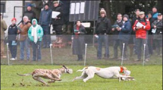 A ' grab' of website photo of coursing in Millstreet town park.