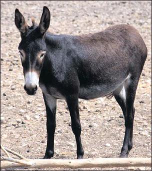 What is it about donkeys that makes them so appealing? Is it their big ears? Or the markings around their eyes, almost like reverse eyeliner?