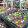 Garden centre sales fell 2.28pc in July, as gardeners cut back on activities because of the hosepipe ban