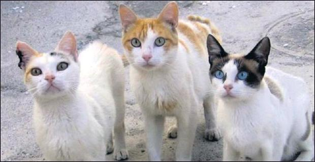 Feral cats only exist because of human failings. Somebody didn't get their pet cat spayed - she had kittens - the kittens were allowed to go wild - and soon the kittens had formed a feral cat colony.