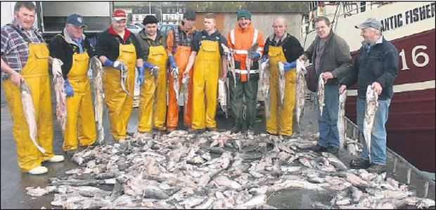 Dingle fishermen with a pile of fish which were half eaten by seals while still in the fishing nets. Credit: Photo by Ted Creedon