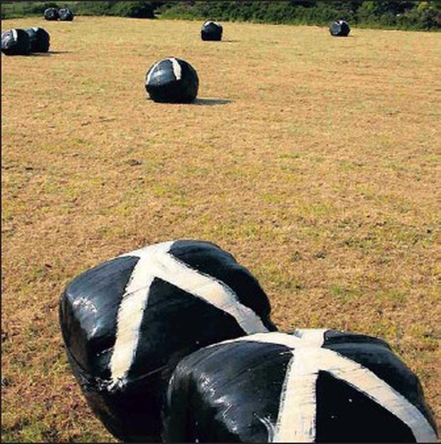 Painting baled silage does little or nothing to deter crows.