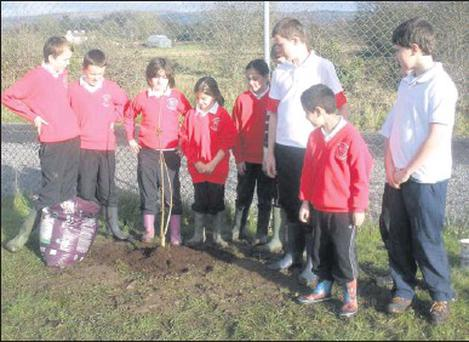 Pupils of Kilmactranny NS after planting their chestnut tree.