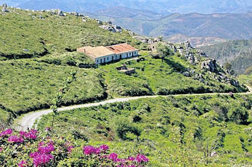 GRASS IS GREENER: Head for the hills of the Algarve and the air gets cooler and sweeter as you pass sharecroppers' plots cut out by generations of farmers