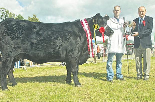 Eustace Burke, Carrigaline, Co Cork, and judge Pat Sheedy parade the champion Angus, Jessana Western Babe, at the Iverk Show, Piltown, Co Kilkenny