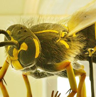 Police are seeking theives who were stung by wasps