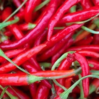 A new 'hottest chilli' has been produced